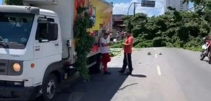 Queda de árvore bloqueia trânsito na avenida Vasco da Gama, em João Pessoa