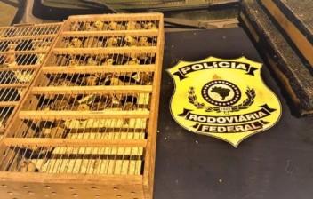 PRF resgata pássaros transportados em mala de carro