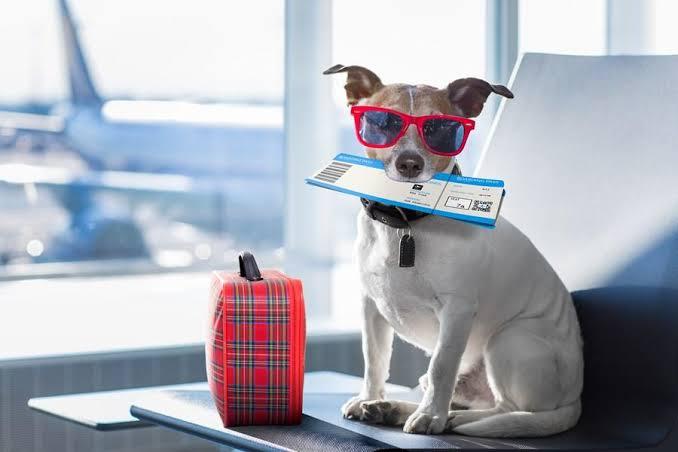 Saiba como transportar seu animal de estimação em viagens