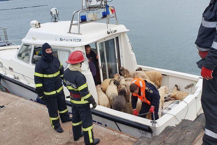 Navio com 14 mil ovelhas tomba no mar na costa da Romênia